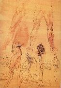 LEONARDO da Vinci Muscles and bone of leg and Hufte oil painting picture wholesale
